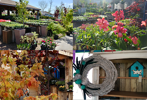 Come see our beautiful selection of plants!